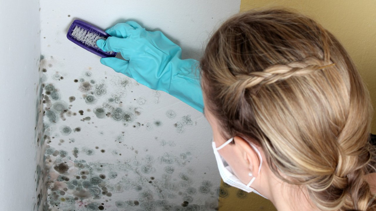 Cleaning mold growing in the walls