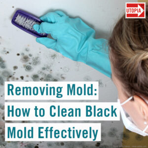 Removing Mold: How to Clean Black Mold Effectively