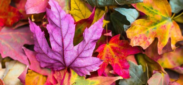 pressing leaves