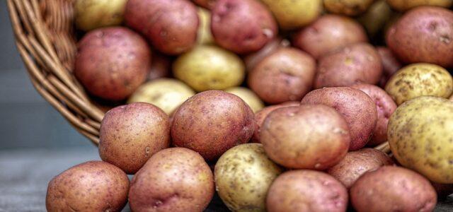 storing potatoes - where to store potatoes