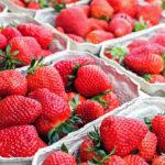 Storing strawberries how to keep strawberries fresh