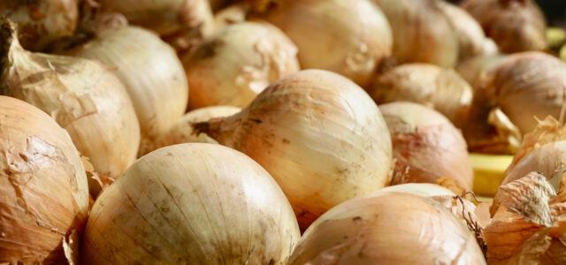Onion skins uses